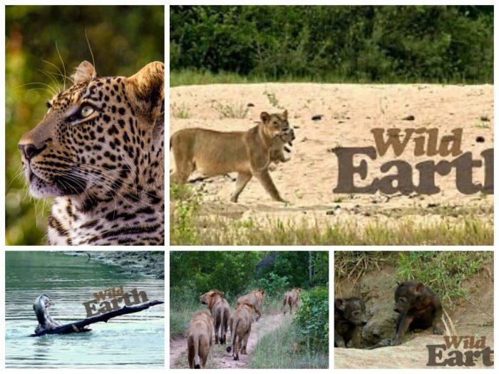 Wild Earthlive