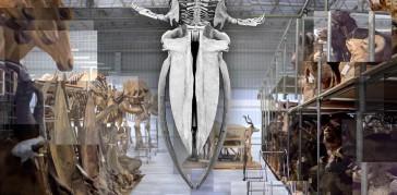 blue-whale-exp-2-hti-top-jpg-thumb-480-480